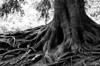 How Deep are Your Theological Roots